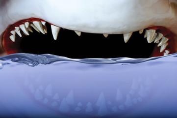 Shark - Jaws