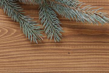 blue spruce twig on wooden plank