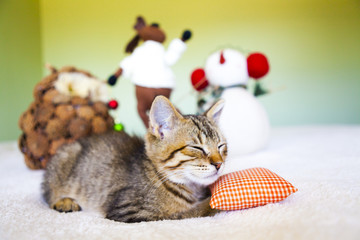 Young cat in a Christmas setting, lying on the bed