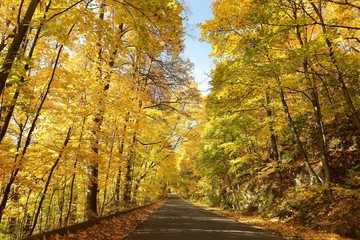 Country road leading through the autumn forest on a sunny day