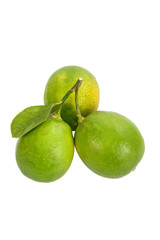 Lime on white background.