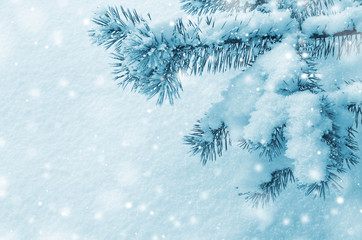 Background with snow-covered pine branch