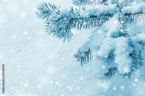 Ели в снегу снег зима  № 2793569  скачать