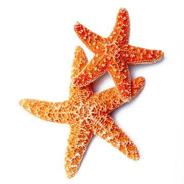 stelle marine in fondo bianco
