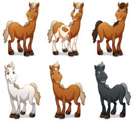 Six smiling horses