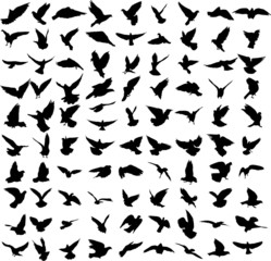 Set of 91 silhouettes of birds