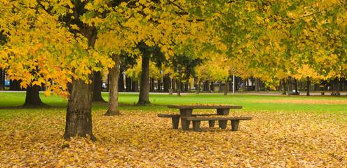 Rest Area Picnic Table Autumn Nature Season Leaves Falling