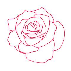 рисунок красная роза на белом фоне