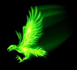 Fire hawk.