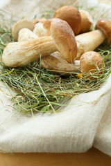 fresh mushrooms in the hay and cloth