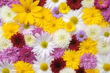 Autumn flowers background
