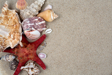 sea shells on sand and empty space for your text