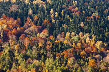 Autumn forest, colorful trees