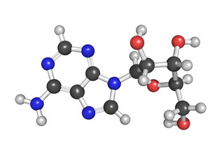 Adenosine (A) nucleoside molecule, chemical structure. This is o