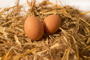 Due uova nella paglia