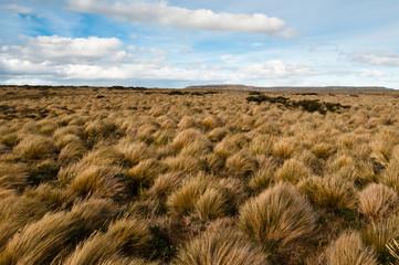 Windswept landscape, Patagonia (Chile)