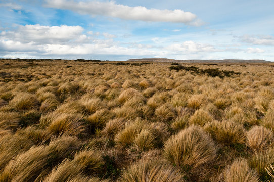 Windswept landscape, Patagonia (Chile)