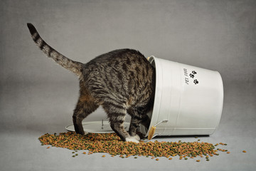 chat volant dans seau à croquettes