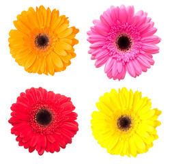 Papiers peints Gerbera Set of gerbera flowers isolated on white background