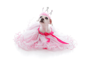 Wall Mural - Pampered Princess or Ballerina pet