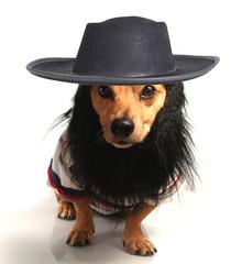 hat dog