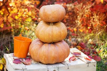 Autumn harvest of pumpkins. halloween decoration