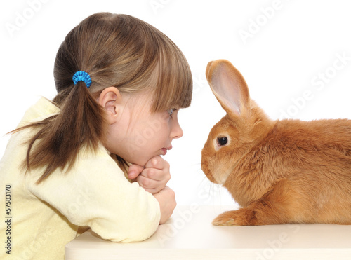Диетолок мелких домашних животных