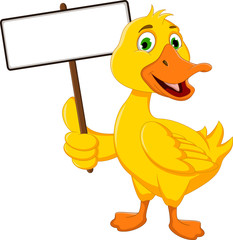 funny duck cartoon with white board