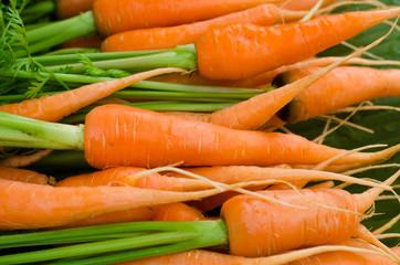 Fresh garden carrots..