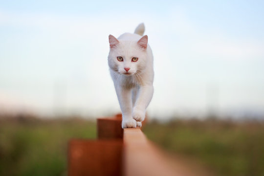 White cat on fence