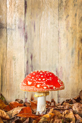 Fly agaric mushroom against an old wooden background
