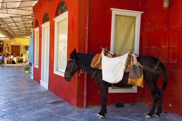 Donkey resting in shadow at Hydra island in Greece in saronikos