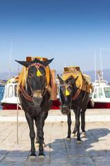 Wall Mural - Greece Santorini island, donkey posing by the sea at main harbor