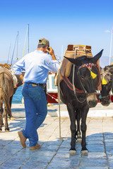 Fototapete - Greece Santorini island, donkey posing by the sea at main harbor