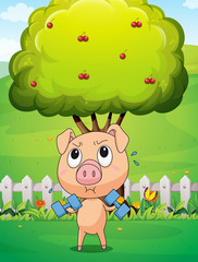 A fat pig exercising near the cherry tree