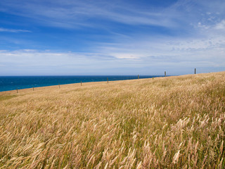Wall Mural - Background of a grassy hill