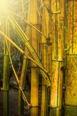 Wall Mural - Bamboo trees