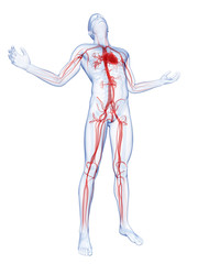 male posing - visible vascular system
