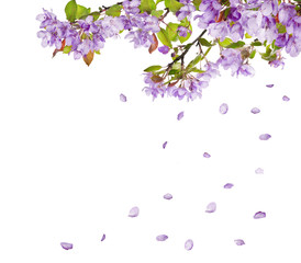 Foto auf Leinwand Flieder lilac flower tree branches and falling petals