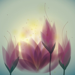 Magenta water lilies / Floral square card
