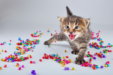 funny little kitten dancing in small metal jingle bells beads