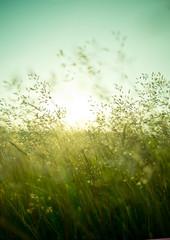 Summer Dry Grass