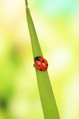 Beautiful ladybird on green grass, close up