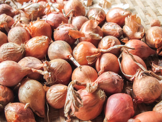 Fresh shallots in the basket from organic farm