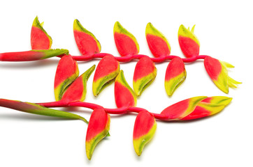 Wall Mural - Hanging Heliconia