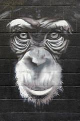chimpanzé graffiti mono 0499f