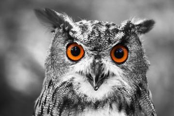 Deurstickers Bestsellers leuchtende Augen - Uhu