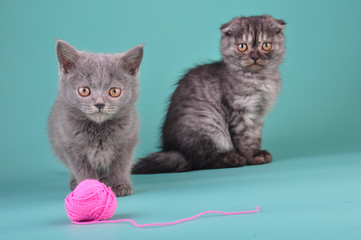 young cats playing with a ball