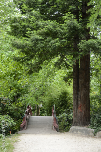 S quoia sequoia gigantea jardin japonais nantes 44 stock photo and royalty free images on for Jardin japonais nantes