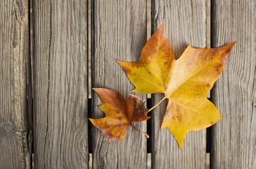 Dos hojas otoñales sobre una superficie de madera
